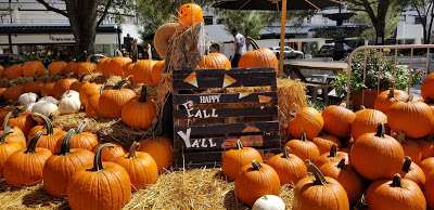 How to visit a pumpkin patch with corn maze with toddlers.